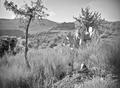 ETH-BIB-Am Fusse des Hohen Atlas ist eine reiche Vegetation-Tschadseeflug 1930-31-LBS MH02-08-0376.tif