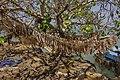 ET Amhara asv2018-02 img061 Lake Tana at Gorgora.jpg