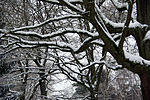 Eichen im Schnee Snow-covered oak trees (8404658729).jpg