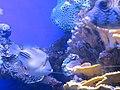 Eilat Coral World Underwater Observatory 16.jpg