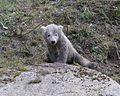 Eisbaerbabies Tierpark Hellabrunn-5.jpg