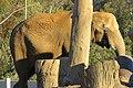 Elephant at the San Diego Zoo 1.jpg