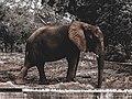 Elephant in kano zoo.jpg
