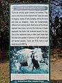 Elephant tusk.JPG