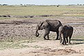 Elephants in Chobe National Park 01.jpg