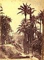 Elx, palmerar i al fons el Palau d'Altamira, 1870, J. Laurent.jpg