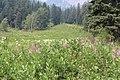 Emerald Lake IMG 5175.JPG