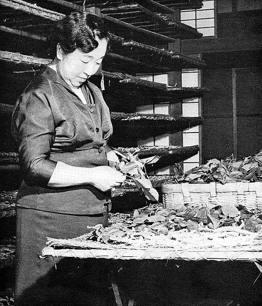 Empress Kojun at a cocoonery 1955-6