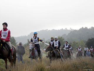 Endurance riding equestrian sport