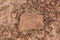 Er zijn potscherven vermoedelijk van verschillende periodes aangetroffen bij het Wassu monument Gambia.jpg