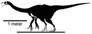 Timeline of therizinosaur research - Skeletal reconstruction of Erlikosaurus andrewsi