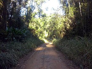 Rio Doce State Park - Road in the park interior