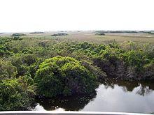 parque nacional everglades fica - photo #46