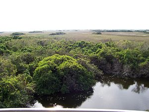 Environment of Florida - Everglades National Park