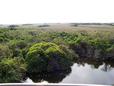 An overlook of the Florida Everglades, viewed from the Shark Valley observation tower, in Everglades National Park.