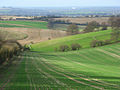 Ewelme Downs - geograph.org.uk - 677136.jpg