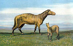 meaning of equidae