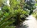 Fale - Giardini Botanici Hanbury in Ventimiglia - 645.jpg