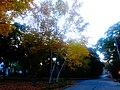 Fall Foliage in Maple Bluff - panoramio (1).jpg