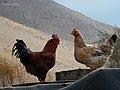 Family disputes, Lar جدال خانوادگی وفسنجان^^^، دشت لار، خشک رود - panoramio.jpg