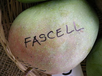 Fascell - Display of 'Fascell' mangoes in the Tropical Agricultural Fiesta in the Fruit and Spice Park in Homestead, Florida.