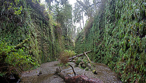Fern Canyon - Panorama of Fern Canyon