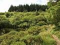 Fernworthy Reservoir - geograph.org.uk - 897319.jpg