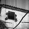 Fige sušijo na oknu, Tinjan, pri Rominji 1949.jpg
