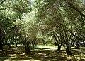 Filoli gardens - IMG 9256.JPG