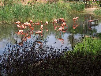 Granby Zoo - Image: Flamingo zoo granby 2006 07