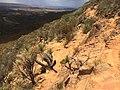 Flinders Ranges SA 5434, Australia - panoramio (187).jpg