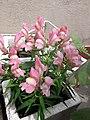 Flower20180523 101417.jpg