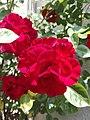 Flower Dortmund 20.jpg