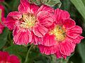 Flowers (14684075890).jpg