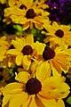 Flowers (9532606980) (3).jpg