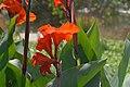 Flowers in Gitega Burundi -Dave Proffer.jpg