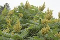Flowers on Bailey Island (4789836695).jpg