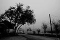 Fog (3126952150).jpg