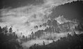 Fog devouring a forest (Unsplash).jpg