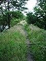 Footpath - geograph.org.uk - 501180.jpg