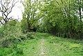Footpath along the Arun Valley line (2) - geograph.org.uk - 1293440.jpg