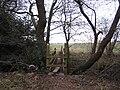 Footpath and footbridge north of Dumble Farm - geograph.org.uk - 120433.jpg