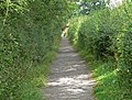 Footpath to King Richard's Well - geograph.org.uk - 918543.jpg