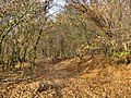 Forest, november - panoramio - paulnasca.jpg