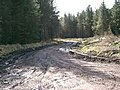 Forest Track - geograph.org.uk - 143743.jpg