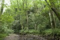 Forest in Mt.Gozen (Ibaraki) 06.jpg