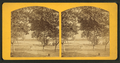 Fort George Island, looking to the inlet, from Robert N. Dennis collection of stereoscopic views.png