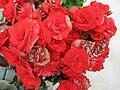 Fotky květů (43).jpg