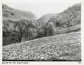 Fotografi från Schweiz - Hallwylska museet - 104458.tif