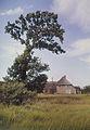 Fotothek df ld 0003052 001 Bauernhof ^ Bäume.jpg